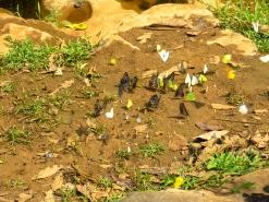 Hundreds of butterflies