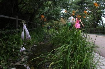 Namsan in Summer