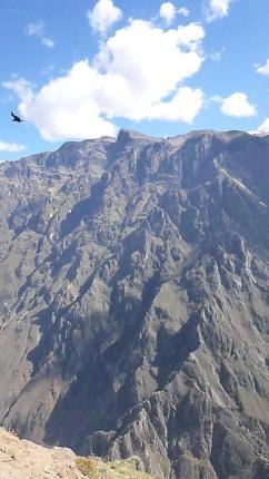 Condor over Colca Canyon