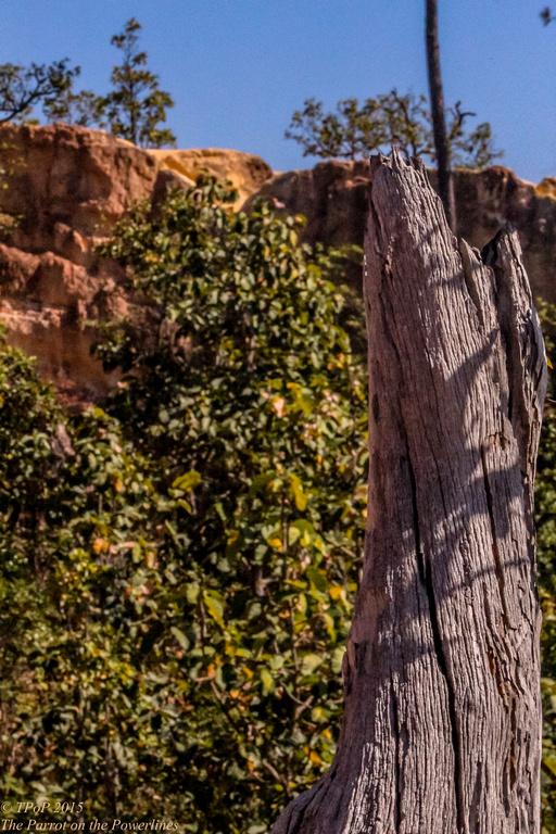 Pai Canyon branch